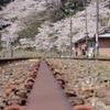 休止鉄路と桜
