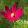 花びらに光