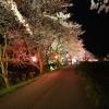桜ロード1