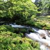 新緑の流れ