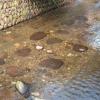 田舎の川、水がキレイ