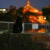 上野公園の黒猫(4)