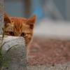 家政猫は、見た。