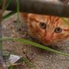 家政猫は、見た。Ⅱ