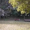20100112_123656[DMC-GF1]P1000038