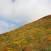栗駒山 紅葉 2012 ④