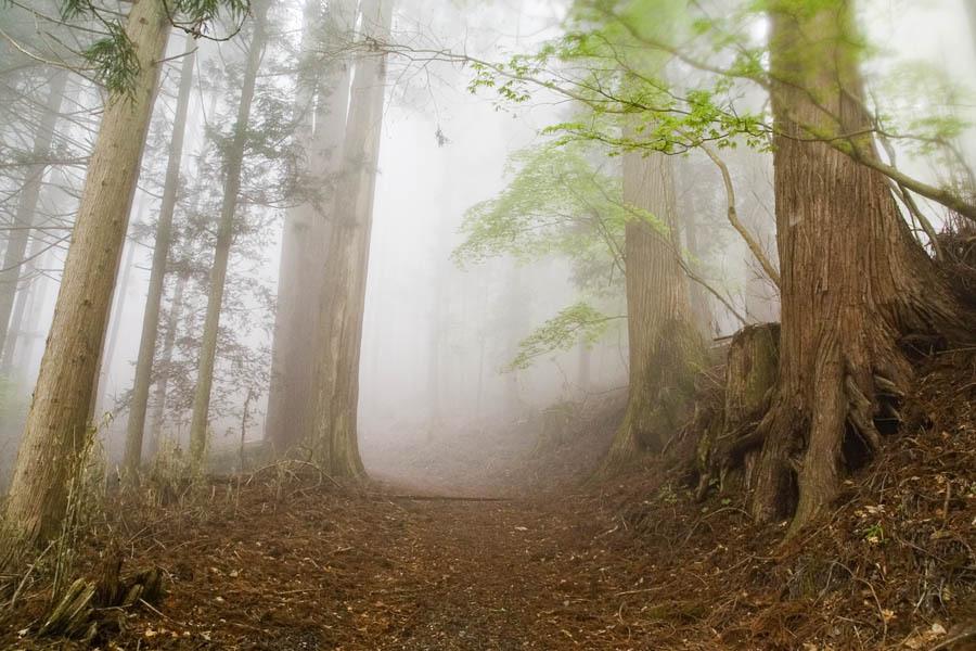 山の奥の道...
