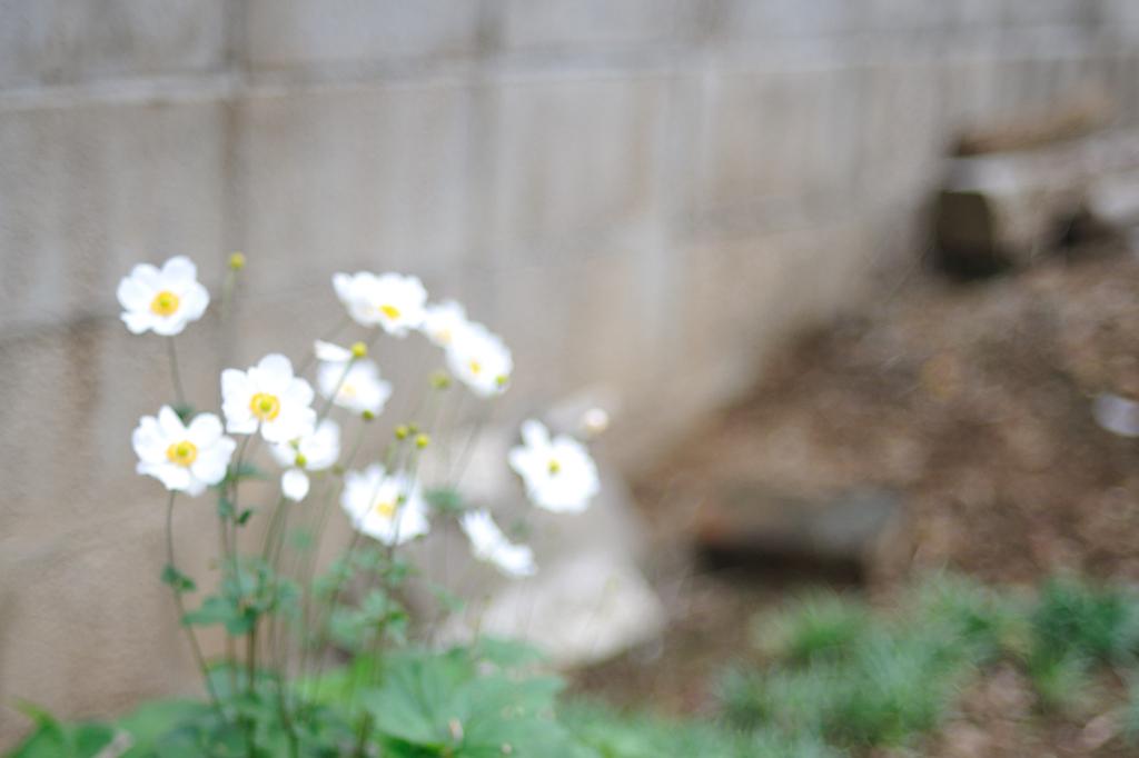 photo65520