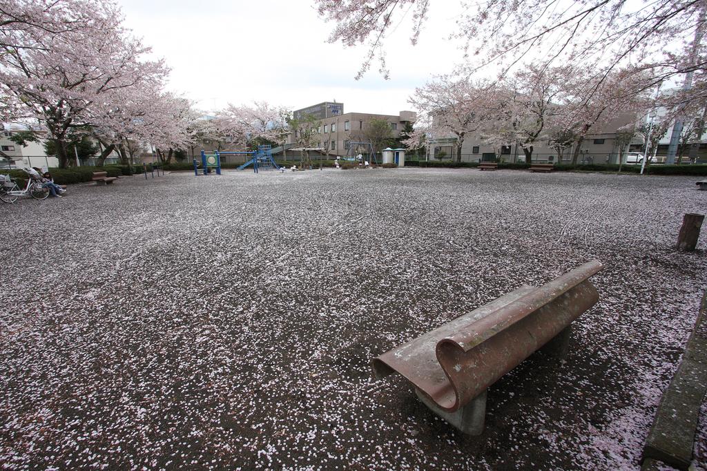 花びらのじゅうたん1