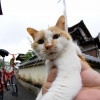 魚眼子猫 3