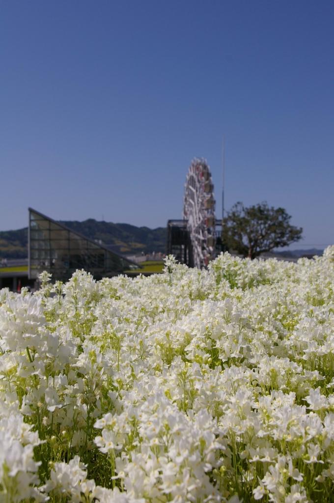 IMGP4475花くるりん