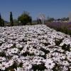 IMGP4477花くるりん