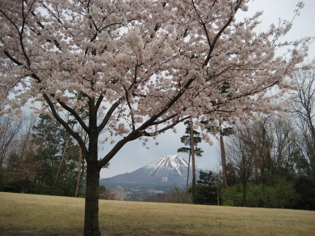 桜の元、のぞく山