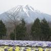 訪れる春、残る冬