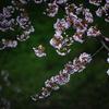みちのくの春