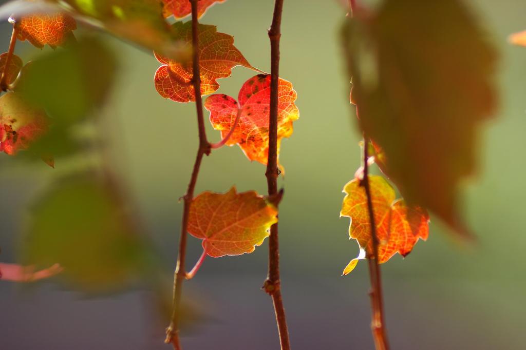 秋の日差しを浴びて
