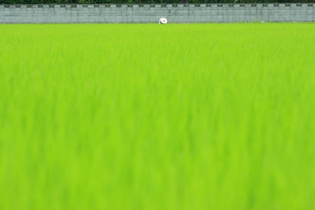 緑の絨毯と麦藁帽子