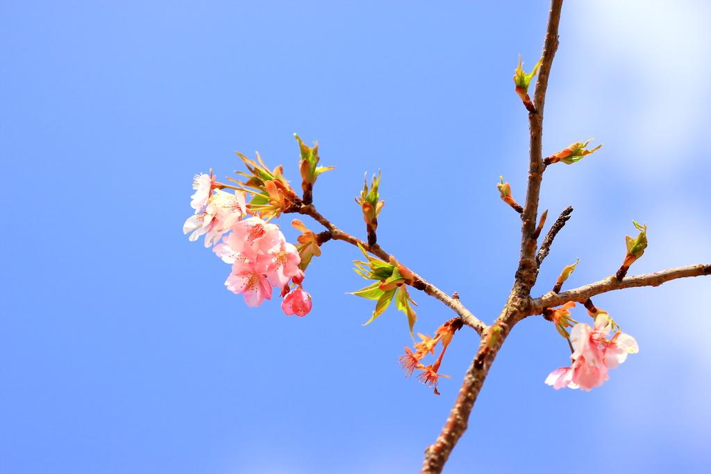 青空に咲く