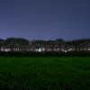 夜桜回廊-Ⅱ
