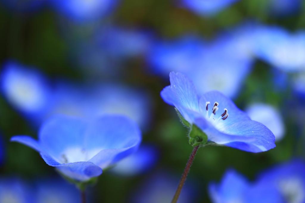 青い妖精 Ⅰ