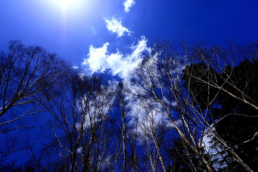 白樺と青い空