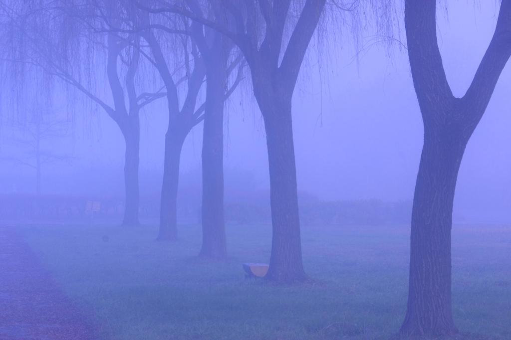 霧の散歩道