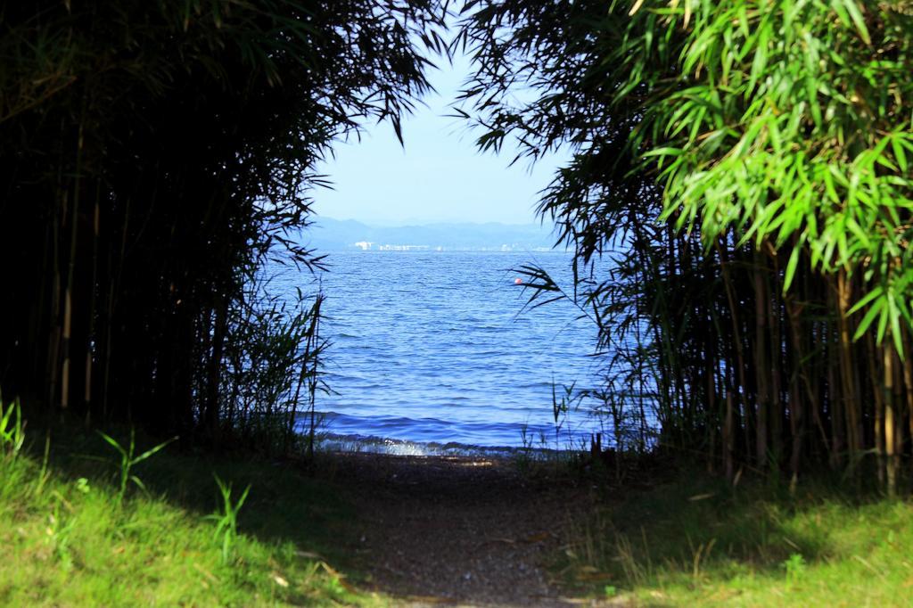 竹林の向こう側