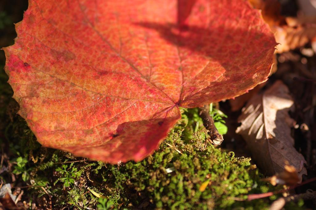 色づきの葉