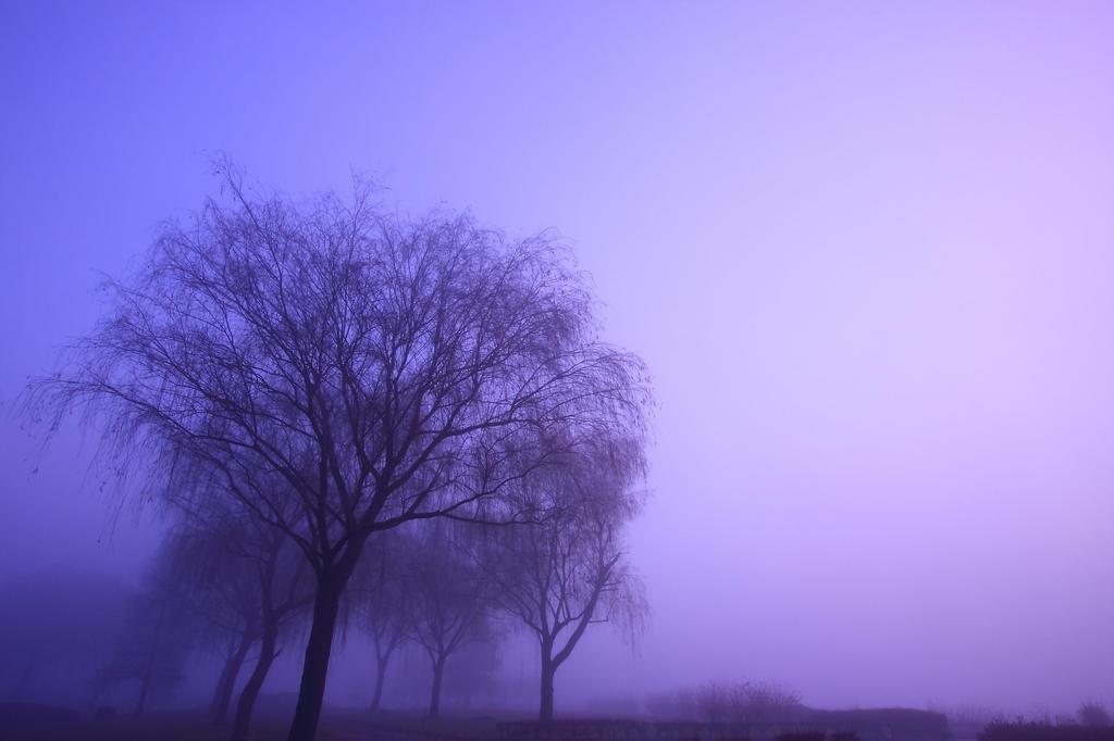 霧を彷徨う