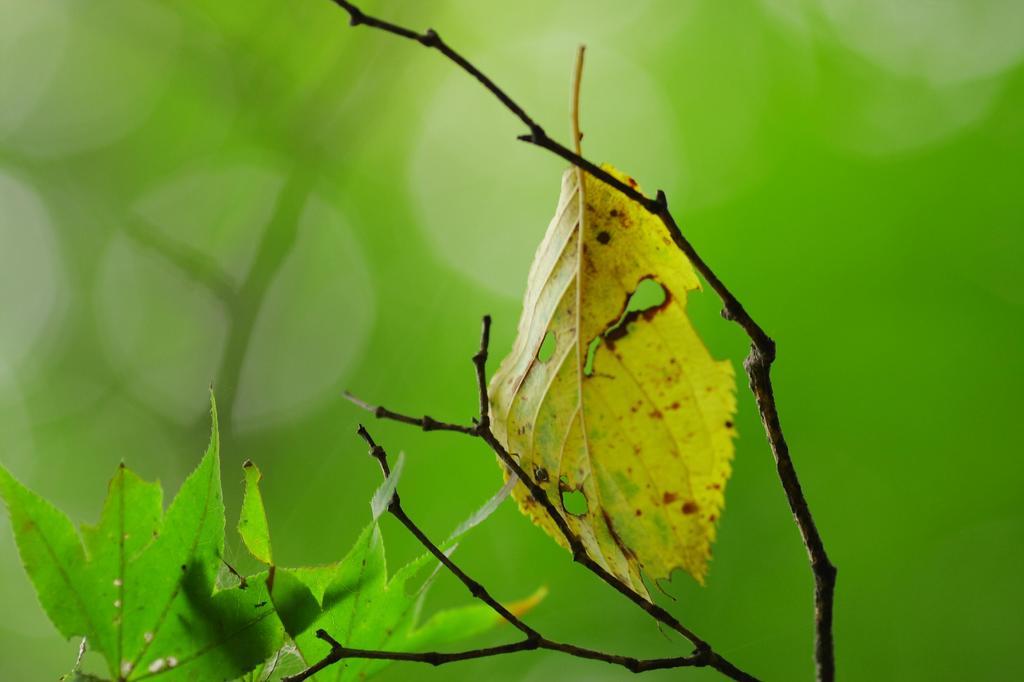 落葉の物語