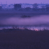 朝霧たなびく