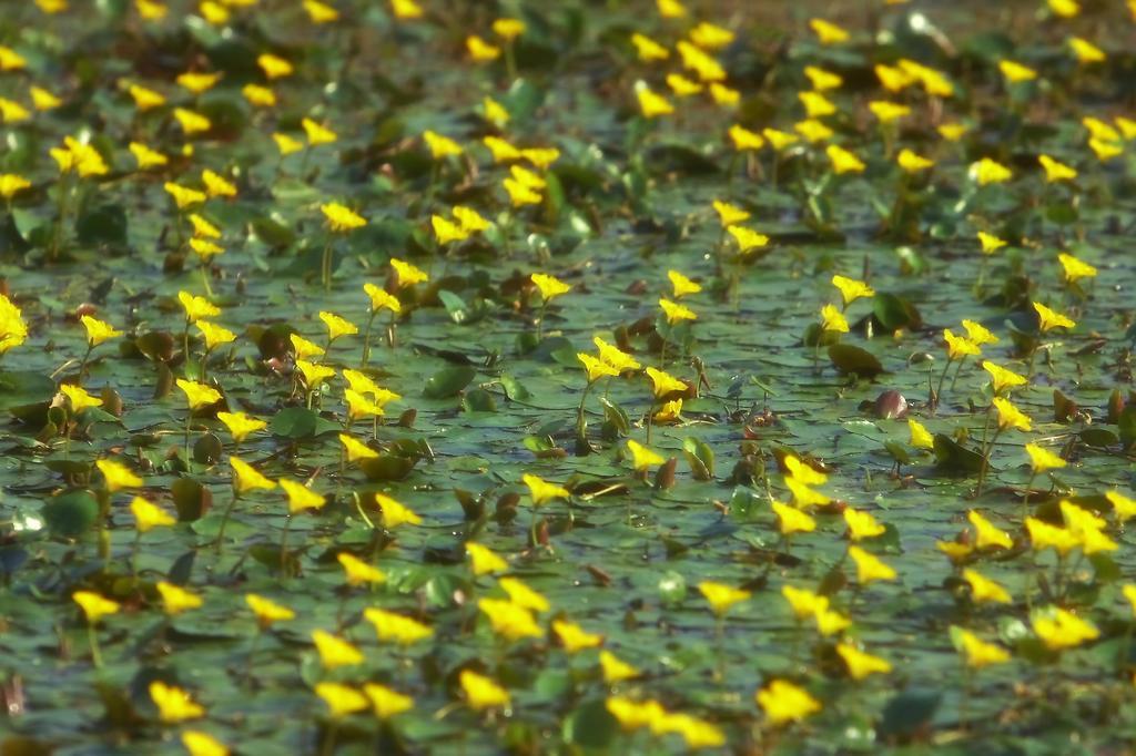メルヘンの池