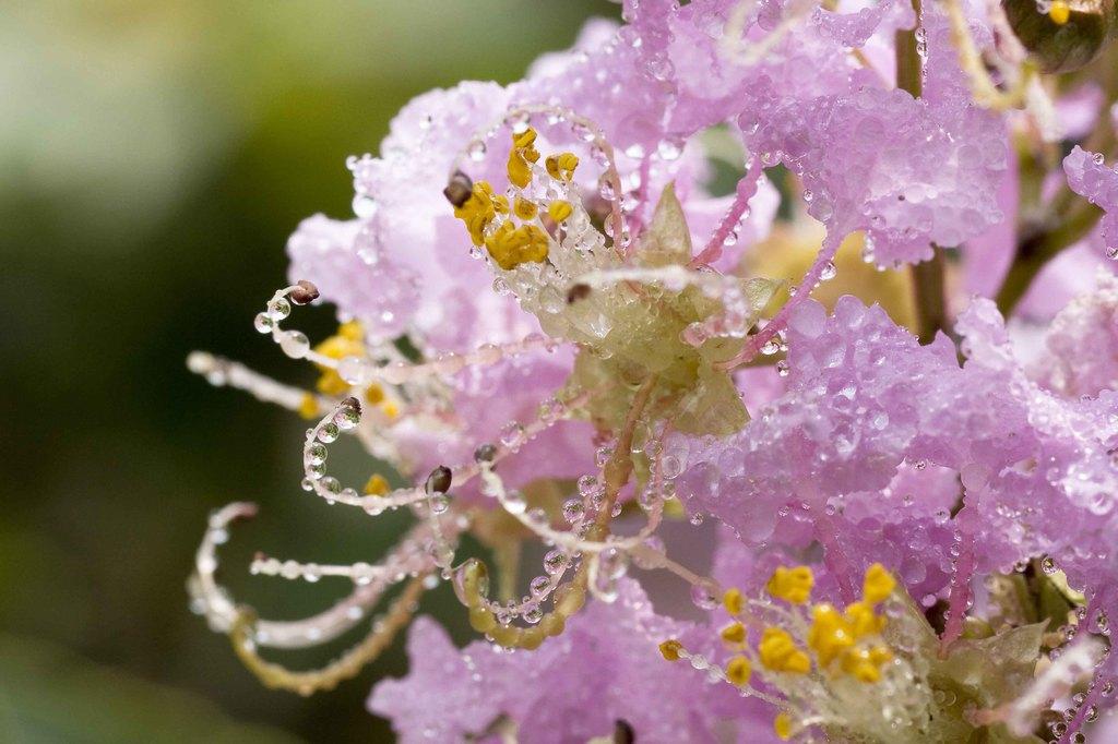 みずみずの花