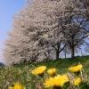 上と下の春