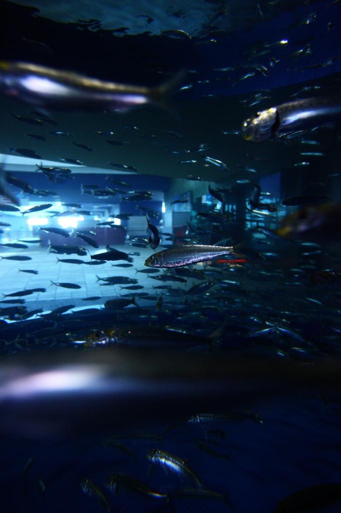 水槽の銀世界