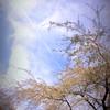 長興山のチーママ(3枚目)
