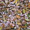 落葉×花弁