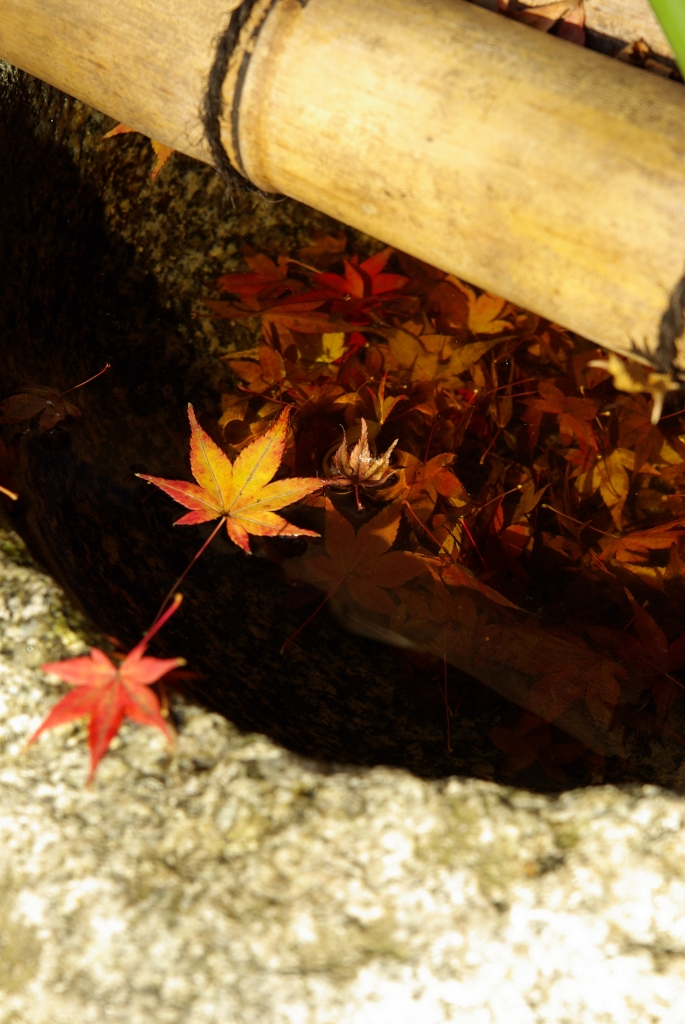 京都 大原 紅葉2