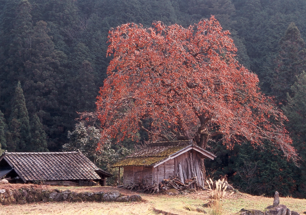 長野県根羽村