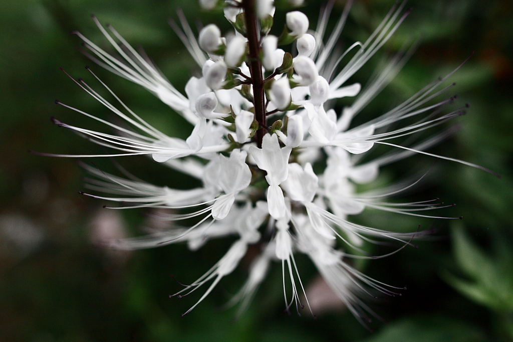 Cat's whiskers