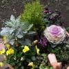 お庭の鉢植え