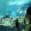 魚たちを眺める子ども