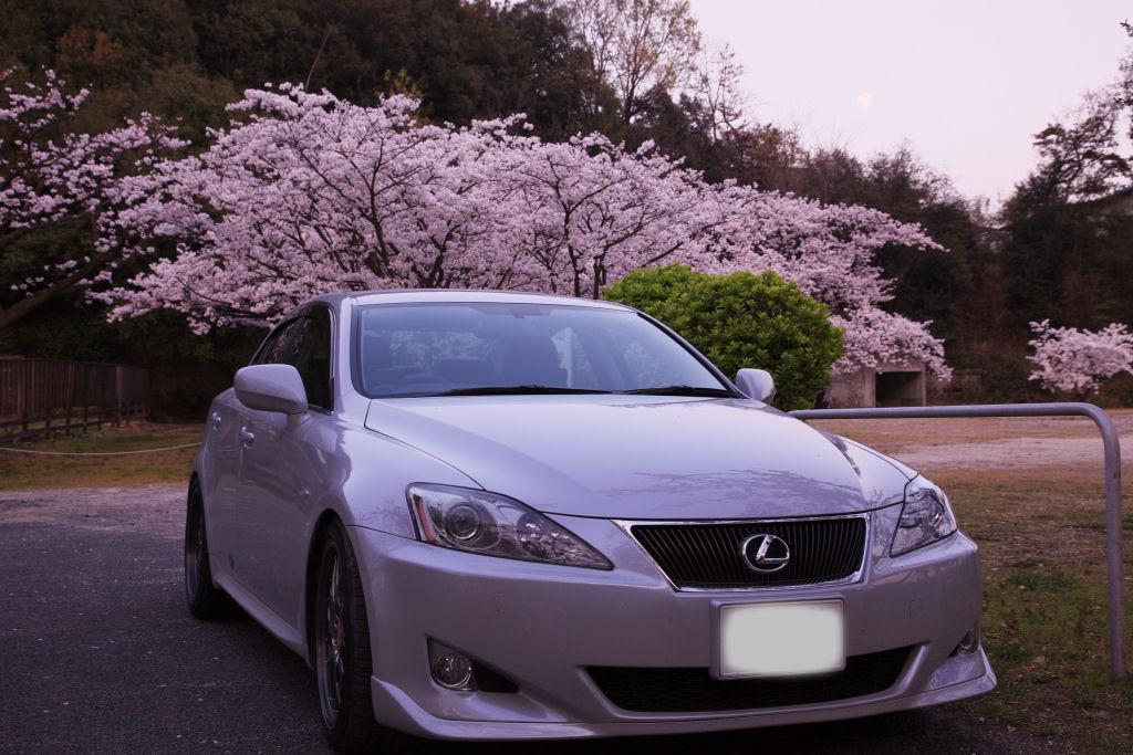 桜とLexus IS