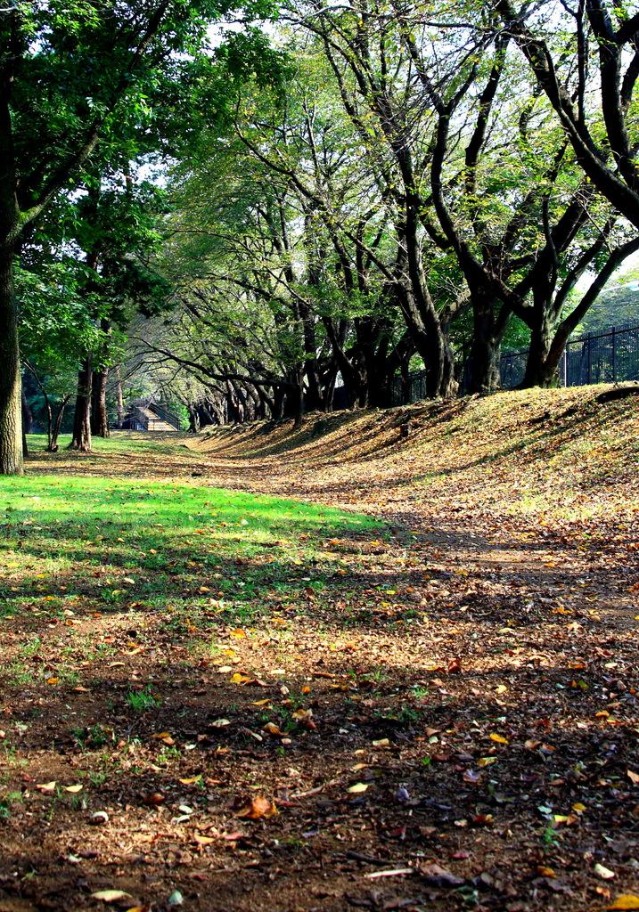 落ち葉と坂道