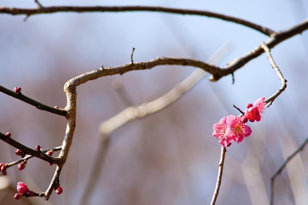 小さい春2