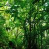 Green Ⅱ