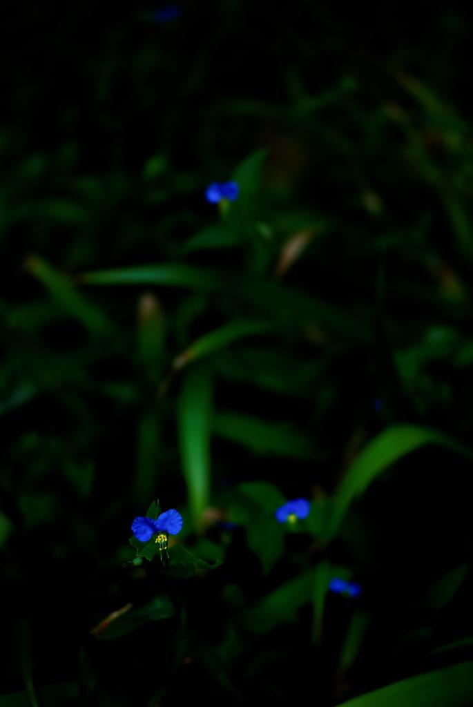 Blue Ⅱ