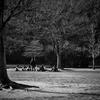 朝の公園Ⅱ