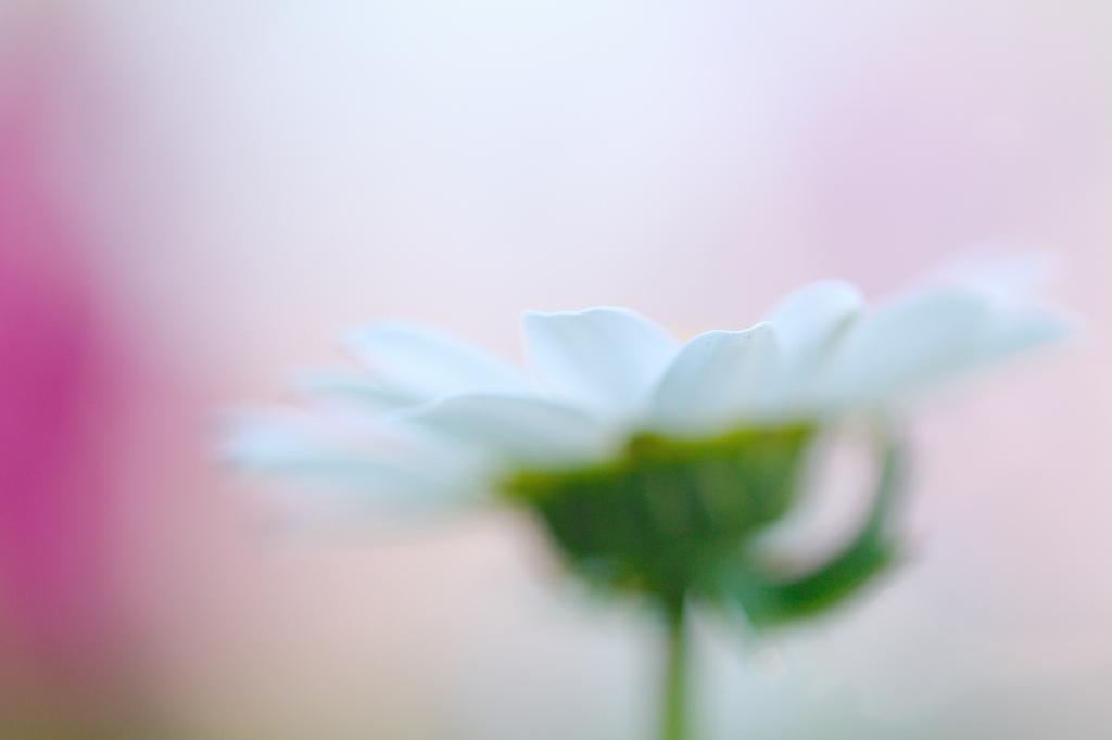 花マクロⅢ(撮影:ワイフ)