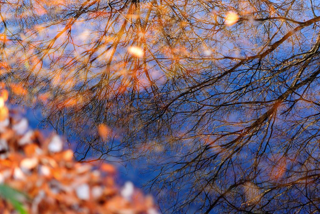 冬の水鏡Ⅱ